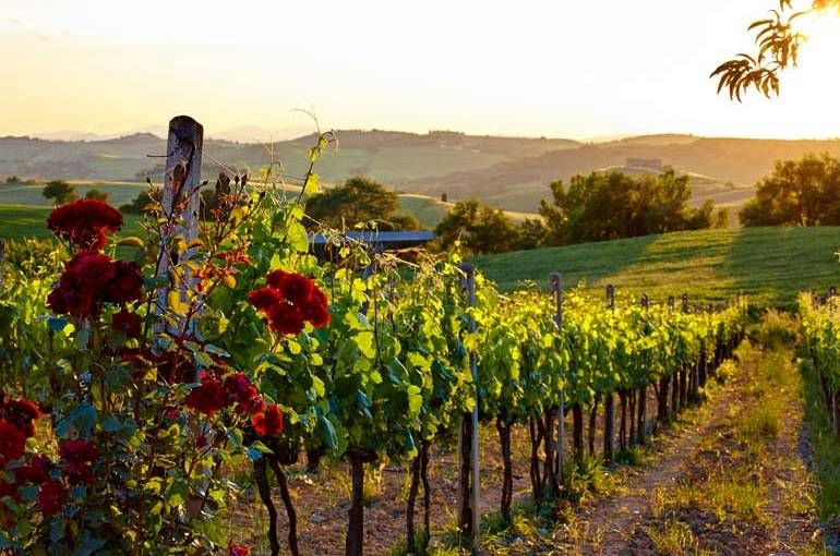 Tuscany Wine Tour